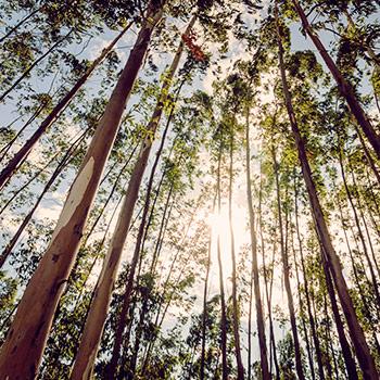 Banner Menu Reflorestamento