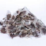 Sementes de Caroba - Jacaranda cuspidifolia - 500 unidades