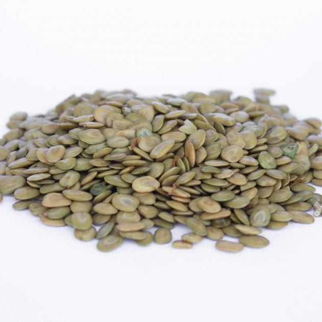 Sementes de Farinha-seca - Albizia hasslerii - 500 unidades
