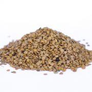 Sementes de Fumo-bravo - Solanum mauritianum - 500 unidades