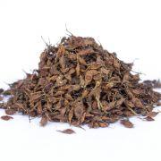 Sementes de Jangadeiro - Heliocarpus americanus - 500 unidades