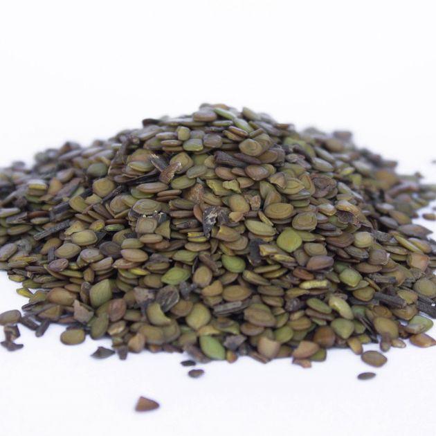 Sementes de Maricá - Mimosa bimucronata - 500 unidades