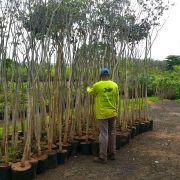 Serviços de Arborização